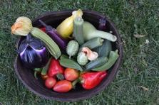 Plants de légumes ethniques