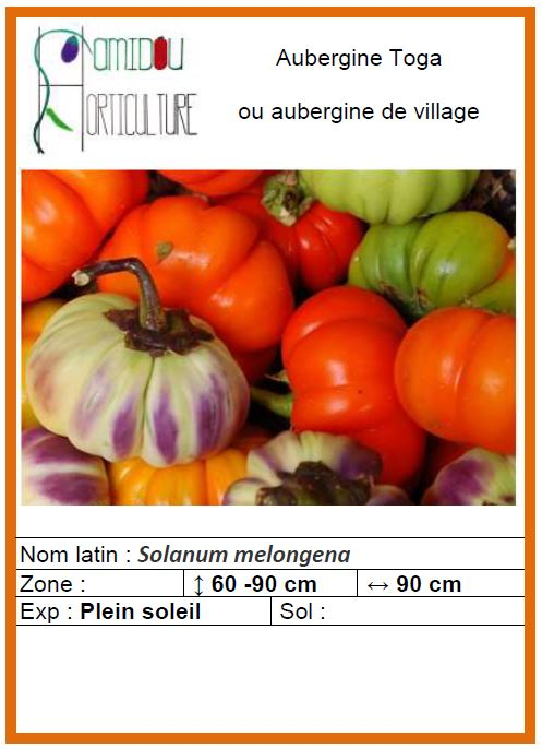 aubergine de village.JPG
